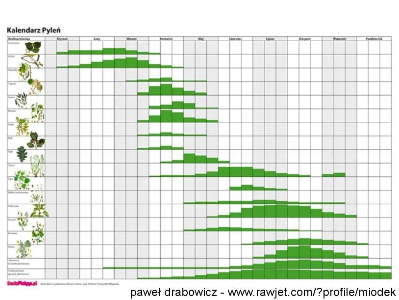 1_kalendarz-pylen-big.jpg