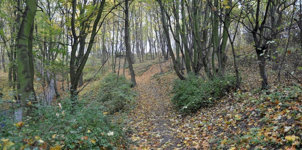 poland-gdansk-wrzeszcz-stary-cmentarz-zydowski